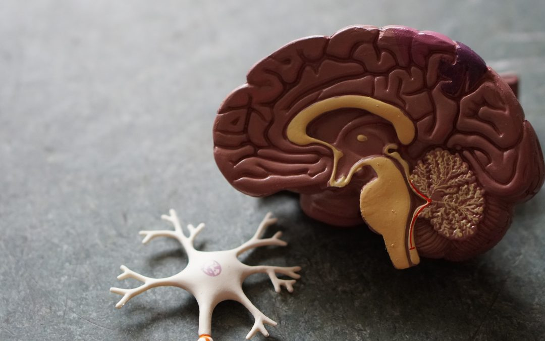 What Does Drug Addiction Look Like in the Brain?