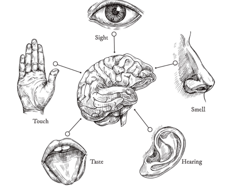 How Our Five Senses Affect Our Mental Health